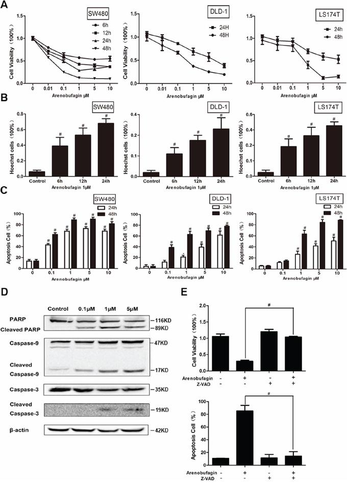 Arenobufagin induces tumor cell apoptosis.