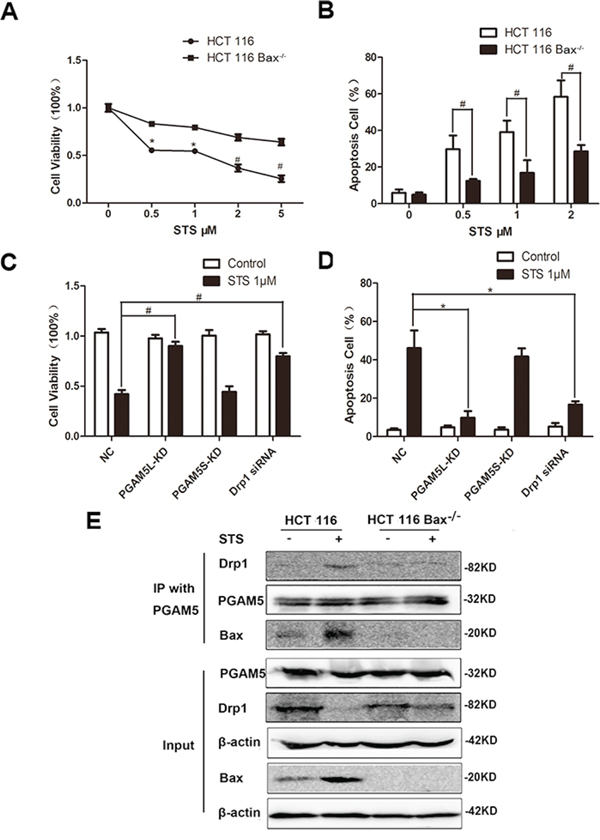 Staurosporine induces the formation of the Bax-PGAM5L-Drp1 complex.