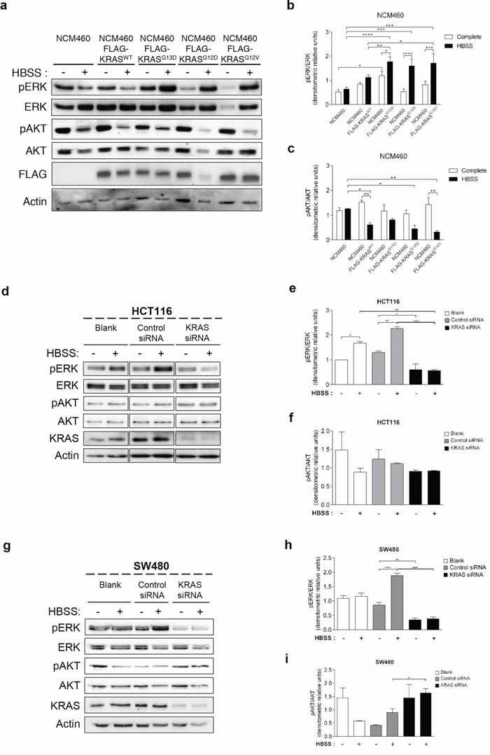 Mutated KRAS up-regulates ERK phosphorylation during starvation in normal and CRC-derived cells.