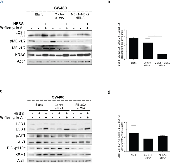 Suppression of MEK1+MEK2, but not of PIK3CA, decreases autophagy in SW480 cells.