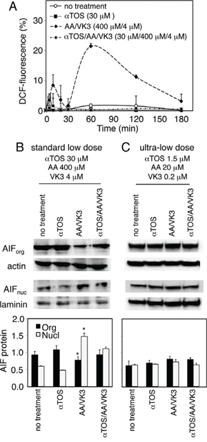 Effect of αTOS on the formation of Reactive Oxygen Species (ROS) and the nuclear translocation of Apoptosis Inducing Factor (AIF).