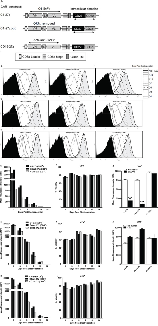 Generation, expression and viability of FRα-specific CAR-transfected human T lymphocytes in vitro.