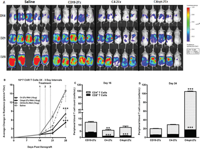 Human C4-27z and C4opt-27z RNA CAR T cells reduce the progression of pre-established tumors in vivo.