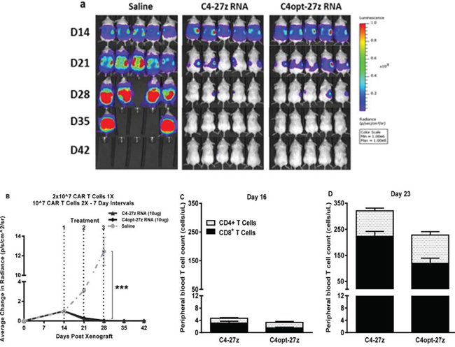 C4-27z and C4opt-27z RNA CAR T cells completely eliminate widely disseminated tumors in vivo.