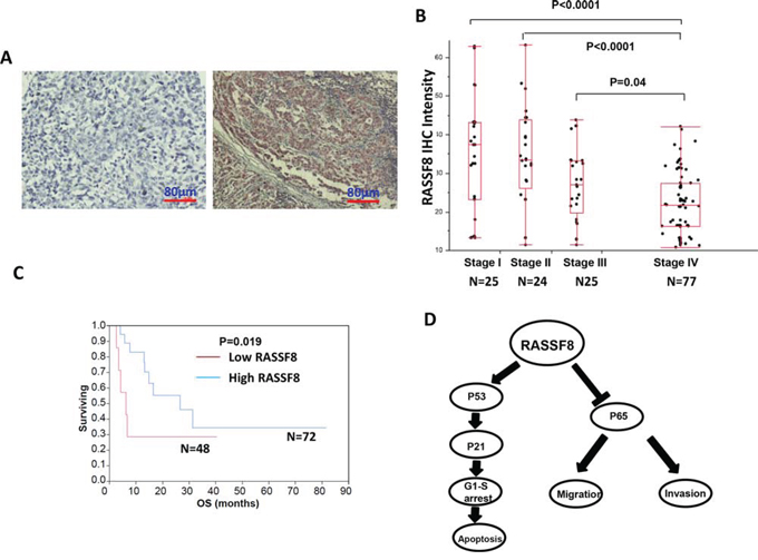 RASSF8 expression and clinical role in melanoma.