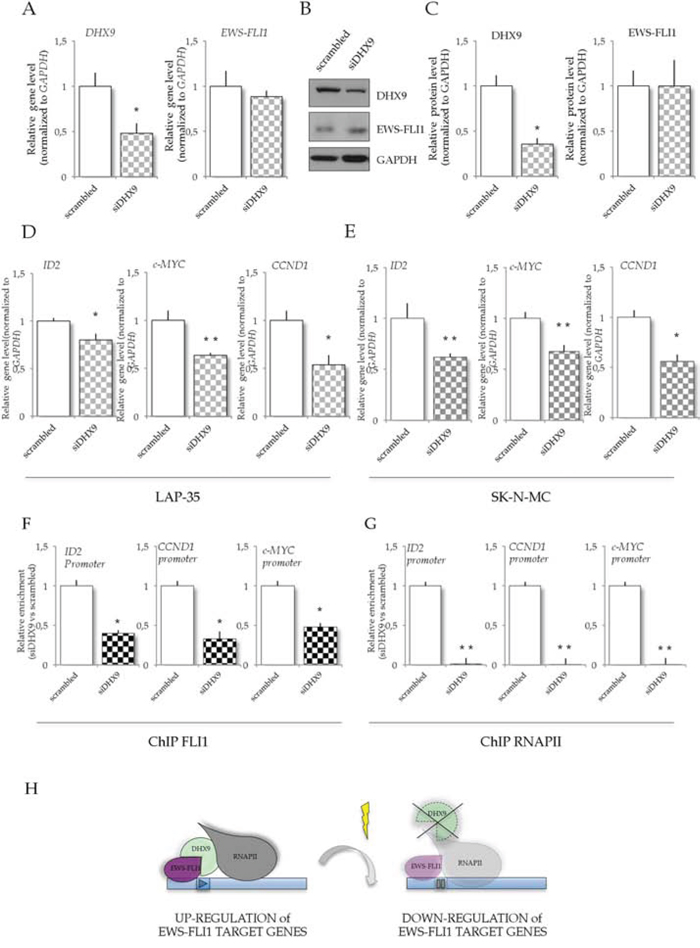 DHX9 knockdown in LAP-35 cells affects EWS-FLI1 target genes.