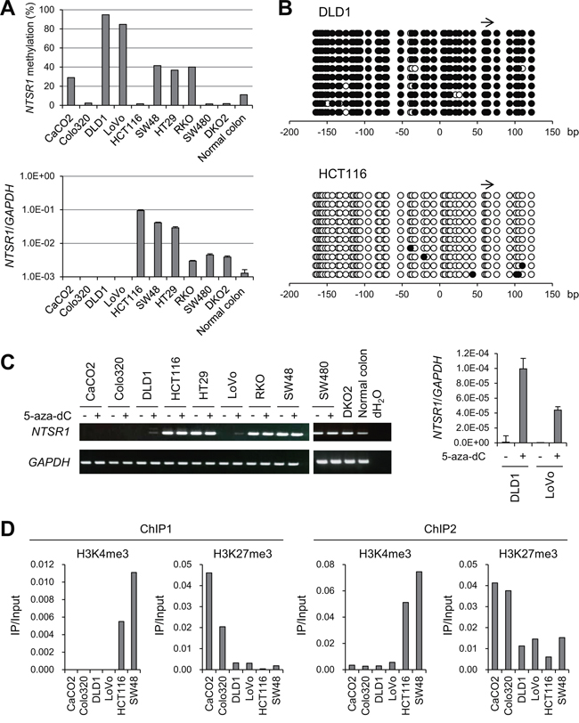 Analysis of NTSR1 methylation and expression in CRC cell lines.
