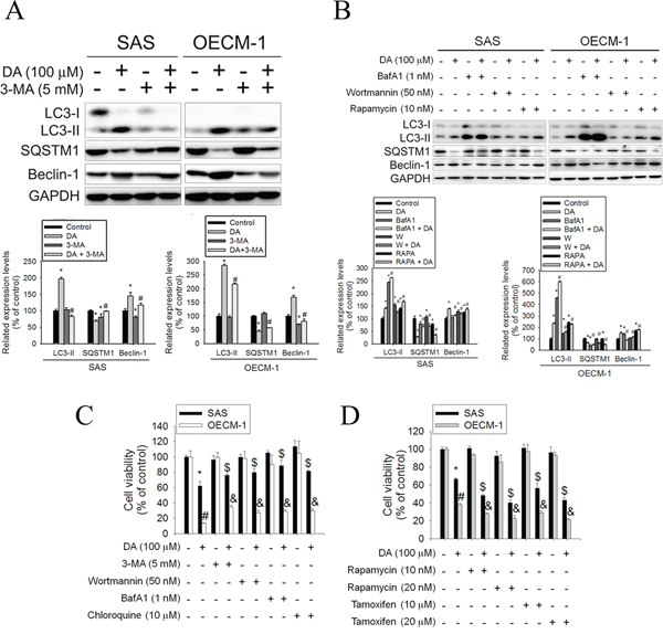 Effects of autophagy enhancers or inhibitors on DA-induced cell death.