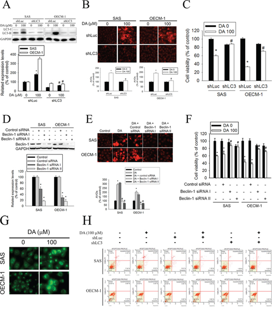 Effect of LC3 silencing and Beclin-1 knockdown on DA-mediated AVOs formation and cell viability.