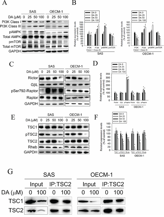 Effect of PI3K, AMPK, mTOR complex and TSC expression on DA-induced autophagy.
