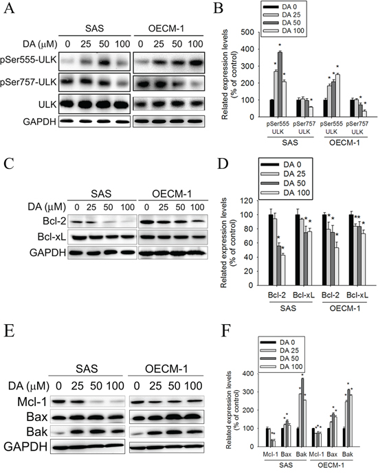 Effect of ULK, Bcl-2 and Bcl-xL on DA-induced autophagy.