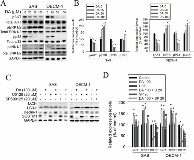 Effect of Akt and MAPK pathway on DA induces cell autophagy processes.