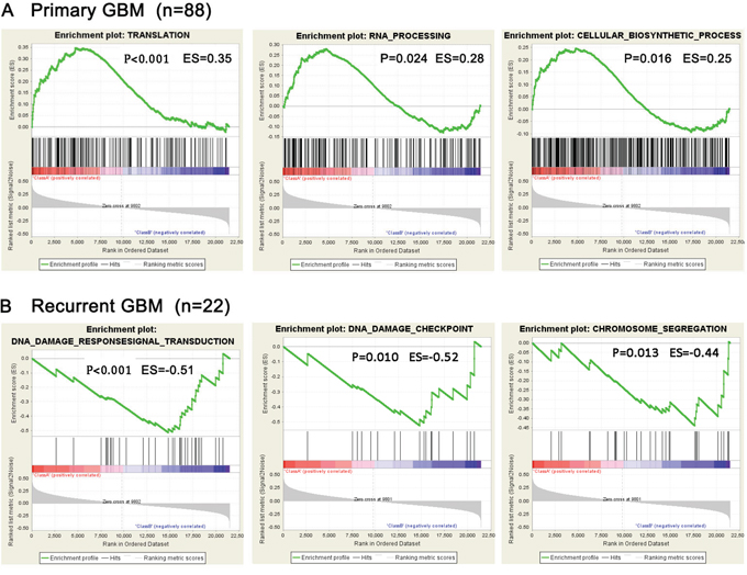 Presence of representative gene sets related to biological processes analyzed by GSEA.