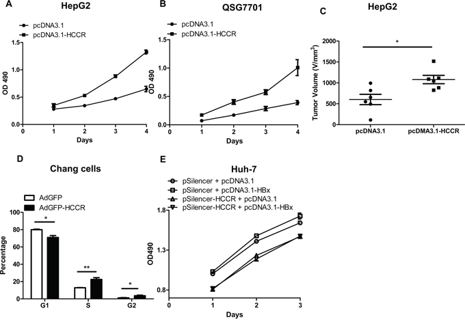 Upregulated HCCR plays a role in HBx-induced hepatocyte growth.