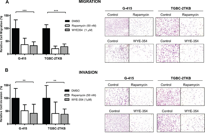 Effect of WYE-354 and rapamycin on cell migration and invasion.