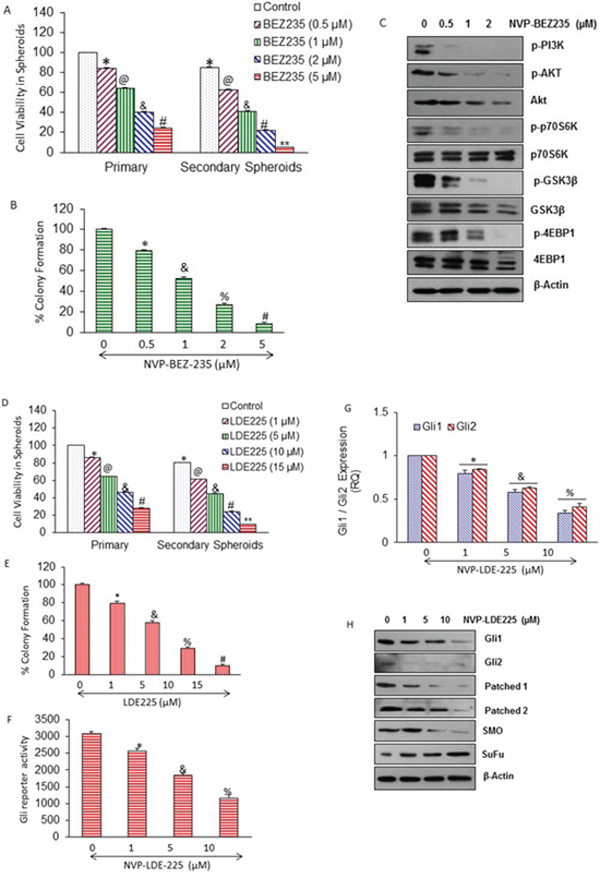 Regulation of PI3/Akt/mTOR and Shh pathways by NVP-BEZ-235, and NVP-LDE-225 in pancreatic CSCs, respectively.