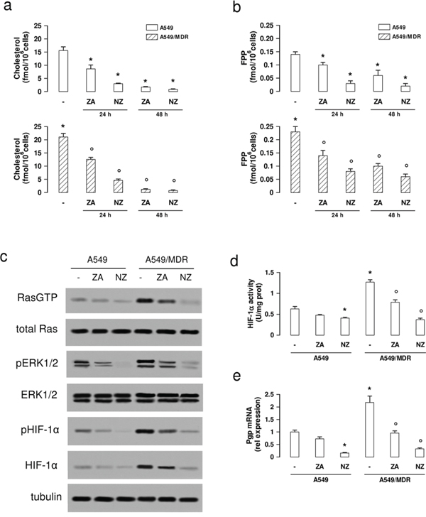 NZ lowers the mevalonate pathway/Ras/ERK1/2/HIF1α axis and Pgp expression in MDR cancer cells.