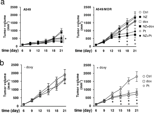 NZ reverts chemoresistance in lung xenografts.