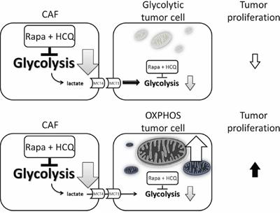 Model of uncoupling energy transfer within sarcoma tumor.