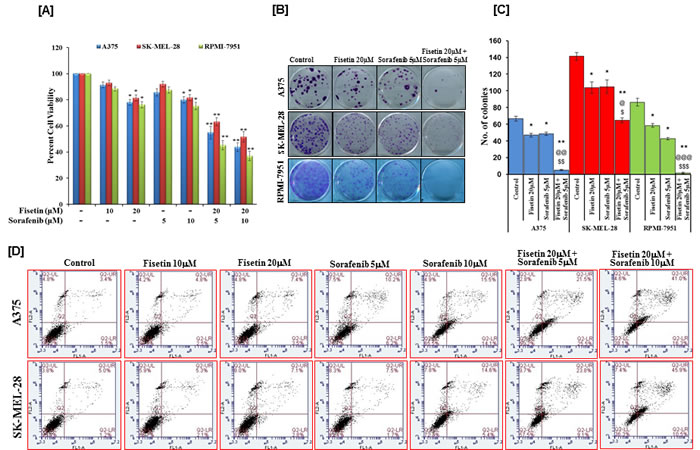 Effects of fisetin, sorafenib and their combinations on cell viability, colony formation and apoptosis of BRAF-mutated melanoma cells.