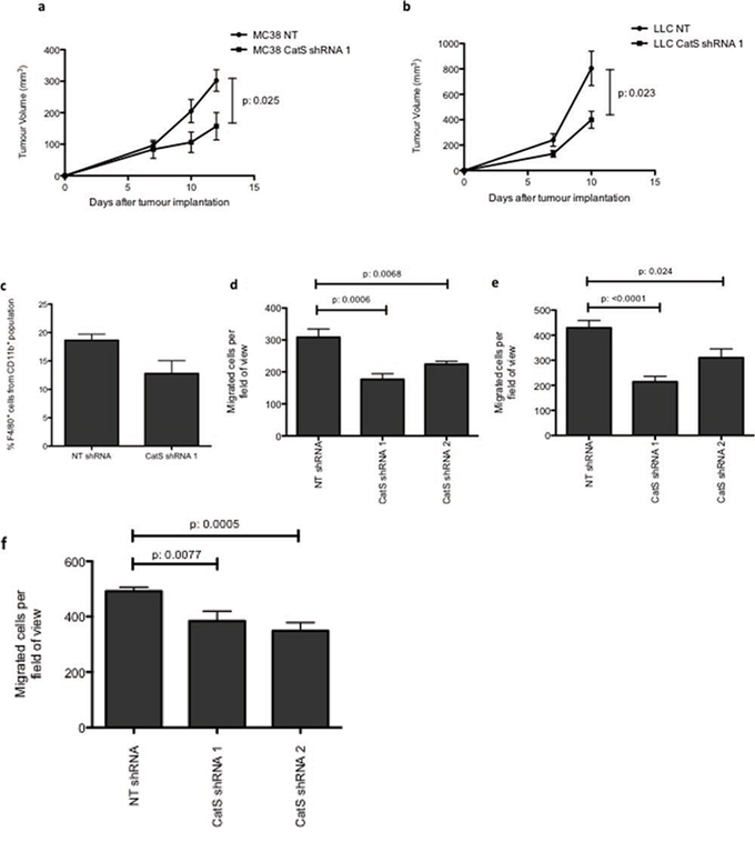 CatS ablation reduces tumour growth and macrophage recruitment.