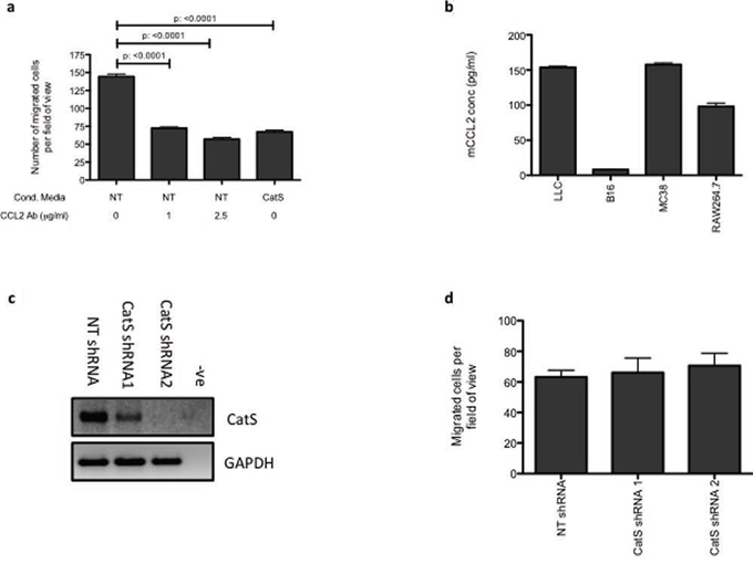 CatS regulation of CCL2 is responsible for altered macrophage recruitment.