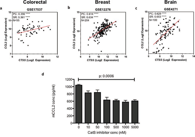 CatS and CCL2 expression are correlated in human tumour samples.