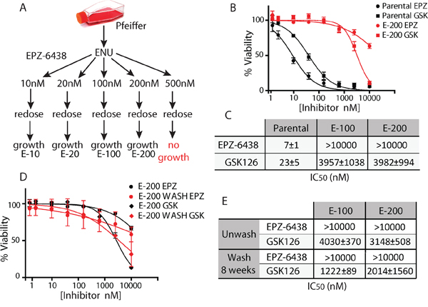 Generation of cells resistant to EZH2i.