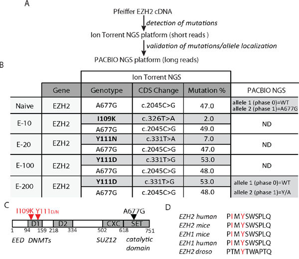 Cells resistant to EZH2i acquire mutations in the EZH2 D1 domain.