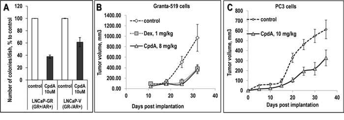 Anti-cancer effect of CpdA in colony forming assay and in xenograft models.