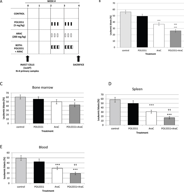 In vivo inhibition of CXCR4 with POL5551 sensitizes infant MLL-R ALL blasts to cytarabine.