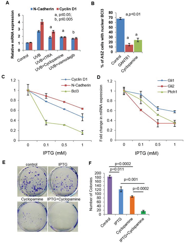 Crosstalk of Shh and Bcl3 signaling pathways in BCC cells regulate proliferation.
