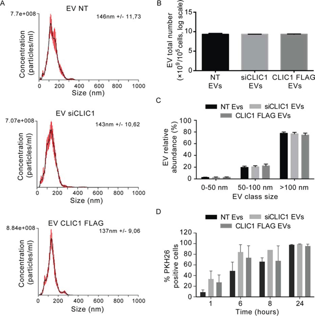 EV size and yield are not affected by CLIC1 modulation in GBM cells.