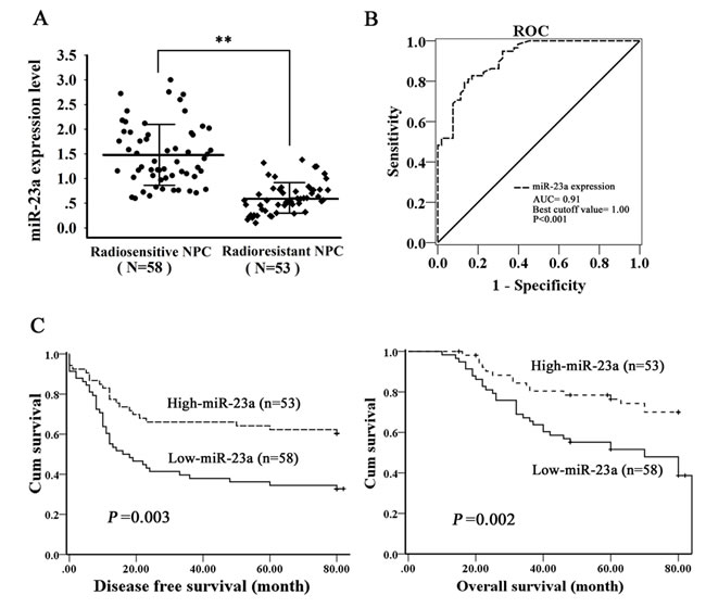 Correlation of miR-23a expression levels with NPC radioresistance and survival of the patients.