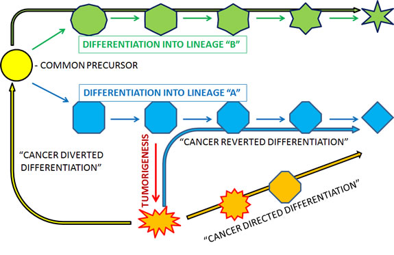 Schematic representation and suggested terminology for different ways in which cancer may be differentiatied.