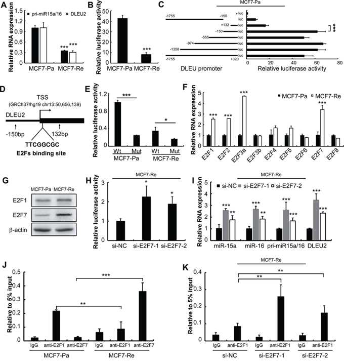 E2F7 suppresses miR-15a/16 expression by competing E2F1 binding site in MCF7-Re cells.