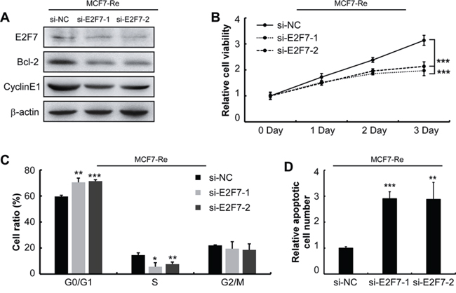 Silencing of E2F7 in MCF7-Re cells sensitizes cells to tamoxifen.