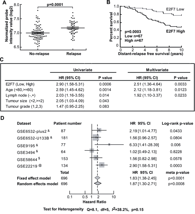 Higher expression of E2F7 is significantly correlated with poorer prognosis and higher risk of relapse in tamoxifen treated patients.