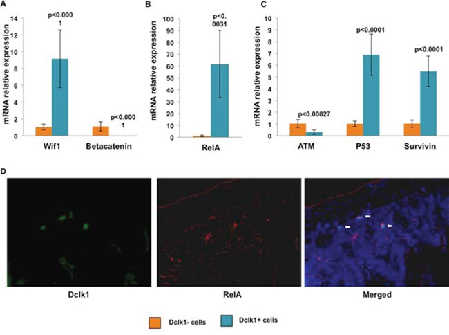 mRNA expression data central to illuminating the potential reserve role of Dclk1+ cells.