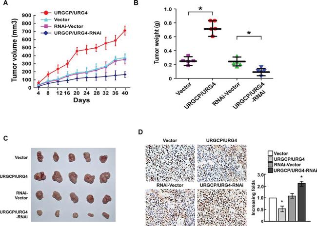 URGCP/URG4 inhibits cisplatin-induced apoptosis of bladder cancercells in vivo.