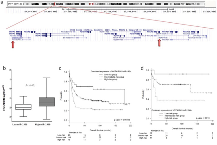 (a–b) Correlation between HOTAIRM1 and miR-196b. (c–d) Prognostic value of the combined expression of HOTAIRM1 and miR-196b.