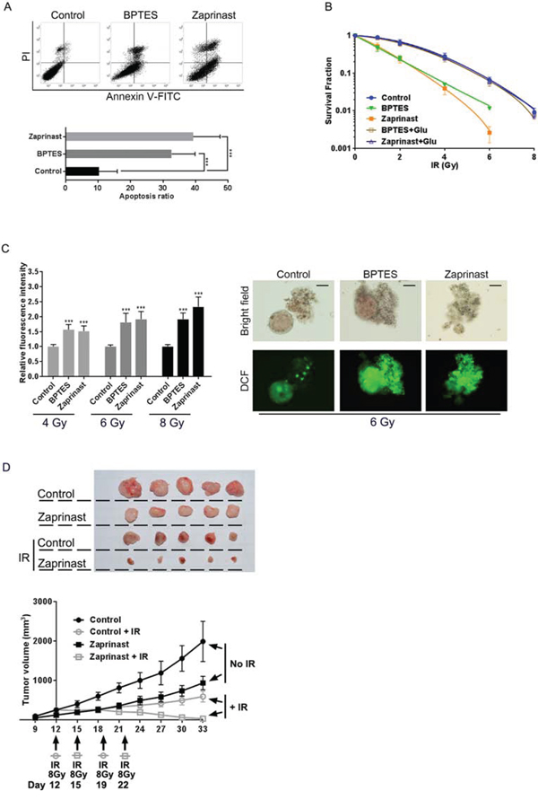 Glutaminase inhibition enhanced radiosensitivity of PCSCs in vitro and in vivo.