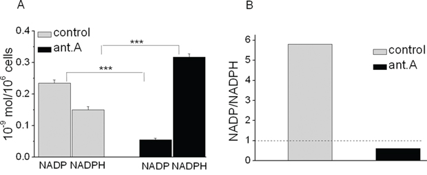 Effects of antimycin A on NADP and NADPH levels and their ratio in K562 cells.