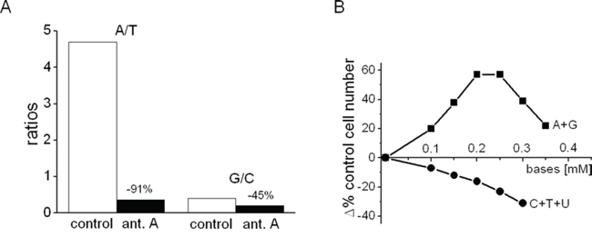 Effects of antimycin A on the A/T and G/C ratios in AH130 cells and of purine or pyrimidine addition on K562 cell number.