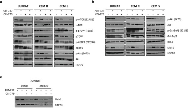 Effects of ABT-737/CCI-779 combination on Bcl-2 and PI3K/Akt/mTOR pathway in ALL cell lines.