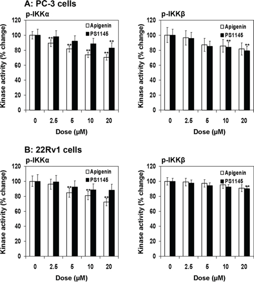 Effect of apigenin and PS1145 on IKKα and IKKβ phosphorylation in human prostate cancer cells.