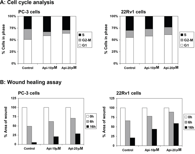 Effect of apigenin on DNA cell cycle and wound healing in prostate cancer cells.