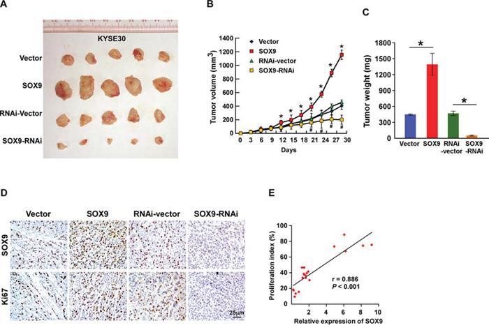 Upregulation of SOX9 enhances the tumorigenicity of ESCC cells in vivo.