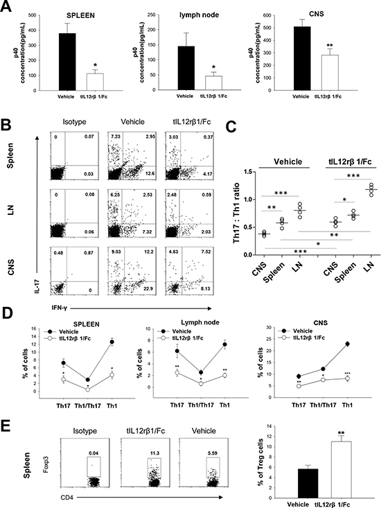 Downregulation of Th1 and Th17 cells by tIL12rβ1/Fc treatment.