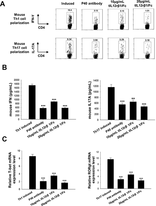 Role of tIL12rβ1/Fc in mouse Th1 and Th17 cell differentiation.